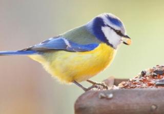A bird 771