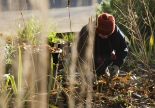 Garden winter 780