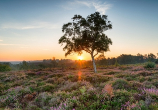 New Forest 444