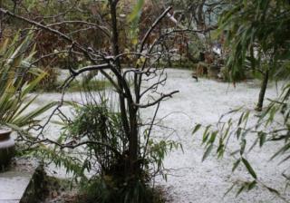 Winter Garden 777