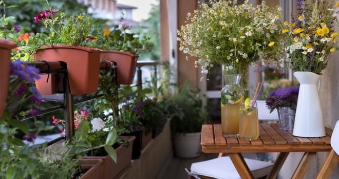 Balcony garden 650