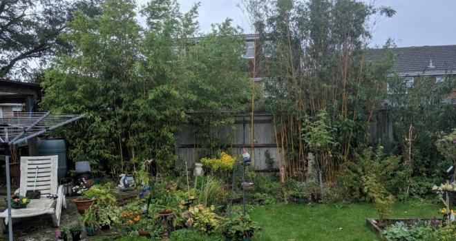 Bamboo 388