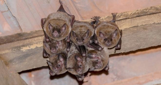 Bats 446