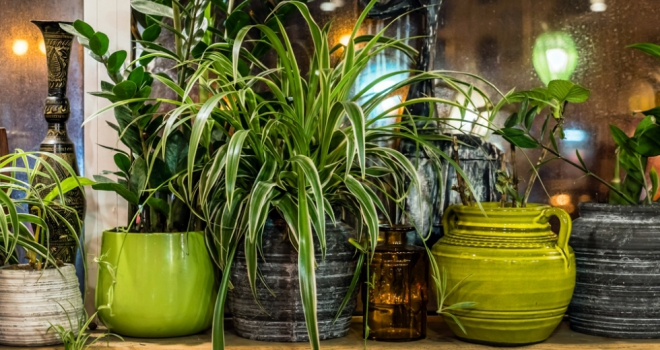 House Plants 555