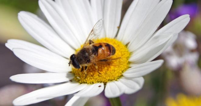 King Bee 333